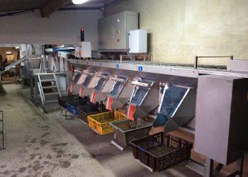 Calibreuse à huîtres linéaire